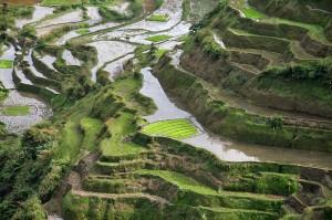 Riževe terase v Banaueju na Filipinih so uvrščene na Unescov seznam svetovne kulturne dediščine