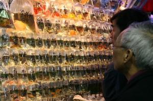 Tržnica z zlatimi ribicami v četrti Kowloon v Hong Kongu