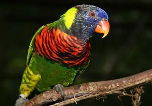 Park ptic, Kuala Lumpur