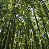 Park Zhonshan, Peking
