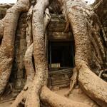 Tempelj Ta Prohm v Angkorju
